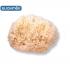 Suavinex Medium Natural Bath Sponge (3302935)
